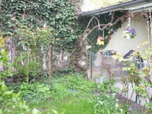 Ente klein Idylle im GartenP1020587