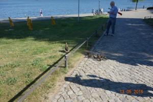 Mario 415 Ufer Fontanes