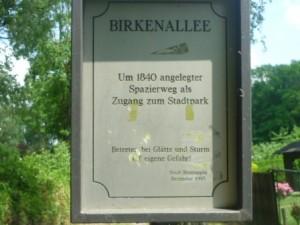Birke 878 WEb versuch