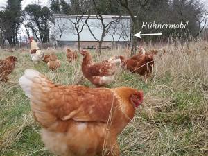 Hühnermobil eins