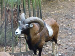 zoo-733