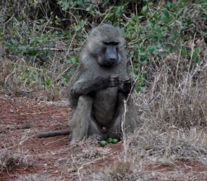 Nairobi vier