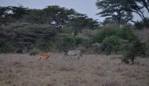 Nairobi zehn