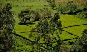 Eldoret dreizehn