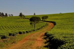 Eldoret eins