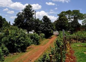 Eldoret neun