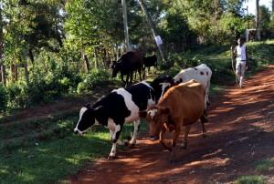 Eldoret zwei