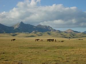 Meike Kröger Berglandschaft mit Pferden