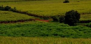 Uganda achtzehn