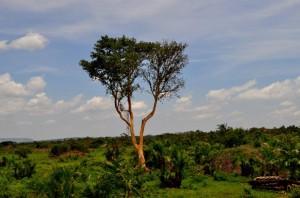 Uganda sieben