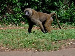 Uganda zehn