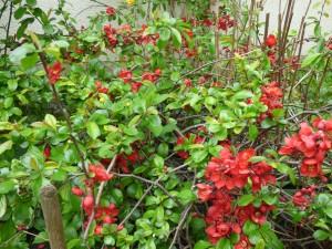 Hausgarten drei