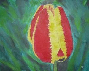 Njörn vierzehn Tulpe