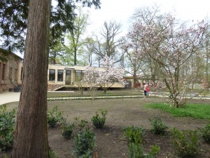 Tempelgarten eins