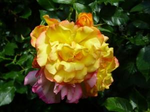 Blumengarten acht
