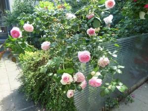 Blumengarten dreizehn