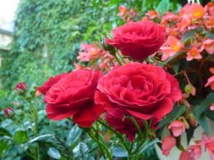Blumengarten eins
