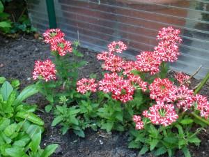 Blumengarten fünf