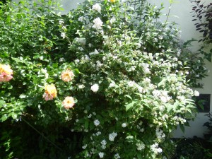 Blumengarten neun