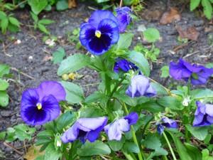 Blumengarten sechs