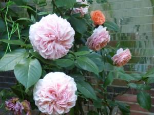 Blumengarten vier