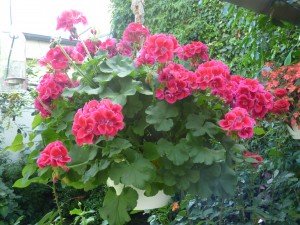 Blumengarten zwölf