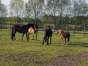 Ronny Ostwald Pferde vier