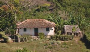 Kuba sieben