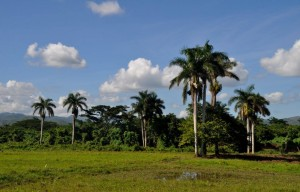Kuba zwei